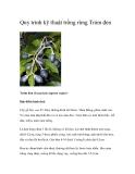 Quy trình kỹ thuật trồng rừng Trám đen