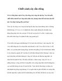 Chiết cành cây sầu riêng