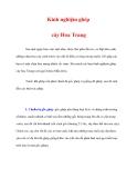 Kinh nghiệm ghép cây Hoa Trang