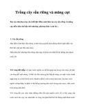 Trồng cây sầu riêng và măng cụt