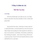 Trồng và chăm sóc cây Mít Mơ Cao Sản