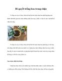 Bí quyết trồng hoa trong chậu