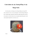 Cách chăm sóc cây Xương Rồng và cây Mọng Nước