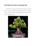 Cách làm cho lá đa, lá sung nhỏ lạ