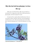 Độc đáo hai loài hoa phượng ở xứ hoa Đà Lạt