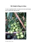 Kỹ thuật trồng cà chua cho nông dân