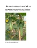 Kỹ thuật trồng dưa leo năng suất cao