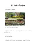 Kỹ thuật trồng hoa
