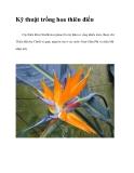 Kỹ thuật trồng hoa thiên điểu