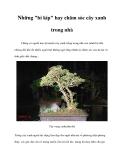 """Những """"bí kíp"""" hay chăm sóc cây xanh trong nhà"""