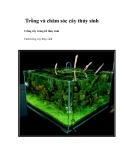 Trồng và chăm sóc cây thủy sinh