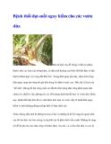 Bệnh thối đọt-mối nguy hiểm cho các vườn dừa