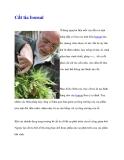 Cắt tỉa bonsai