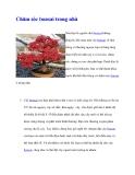 Chăm sóc bonsai trong nhà