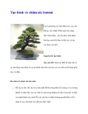 Tạo hình và chăm sóc bonsai
