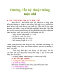 Hướng dẫn kỹ thuật trồng mộc nhĩ