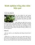 Kinh nghiệm trồng dừa xiêm hiệu quả