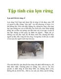 Tập tính của lợn rừng