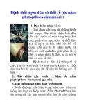 Bệnh thối ngọn dứa và thối rễ (do nấm phytopthora cinnamori )