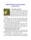 Bệnh thối xám cà chua (Botritis cinerea Pers)