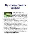 Bọ xít xanh (Nezara viridula)
