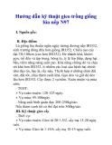 Hướng dẫn kỹ thuật gieo trồng giống lúa nếp N97