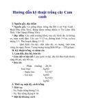 Hướng dẫn kỹ thuật trồng cây Cam canh