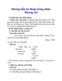 Hướng dẫn kỹ thuật trồng nhãn Hương chi