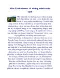 Nấm Trichoderma và những mảnh vườn sạch