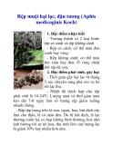 Rệp muội hại lạc, đậu tương (Aphis medicaginis Koch)