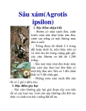 Sâu xám(Agrotis ipsilon)