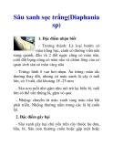 Sâu xanh sọc trắng(Diaphania sp)