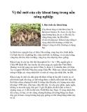 Vị thế mới của cây khoai lang trong nền nông nghiệp