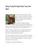 Rượu Vang Đỏ Ngừa Được Ung Thư Phổi