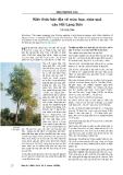 Kiến thức bản địa về mùa hoa, mùa quả cây Hồi Lạng Sơn