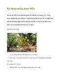 Kỹ thuật trồng bưởi Diễn