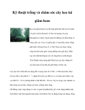 Kỹ thuật trồng và chăm sóc cây keo lai giâm hom