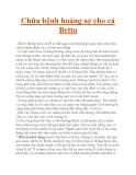 Chữa bệnh hoảng sợ cho cá Betta