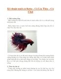 Kỹ thuật nuôi cá Betta - Cá Lia Thia – Cá Chọi