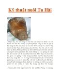 Kỹ thuật nuôi Tu Hài