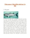 Tổng quan về đặc điểm sinh học Cá Đối