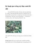 Kỹ thuật gieo trồng cây Đậu xanh ĐX 208