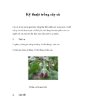 Kỹ thuật trồng cây cà