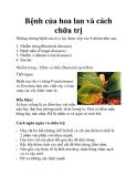 Bệnh của hoa lan và cách chữa trị