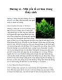 Dương xỉ - Một yếu tố cơ bản trong thủy sinh