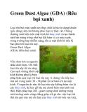 Green Dust Algae (GDA) (Rêu bụi xanh)