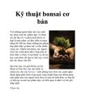Kỹ thuật bonsai cơ bản