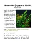 Phương pháp trồng dương xỉ châu Phi (Bolbitis)