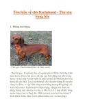 Tìm hiểu về chó Dachshund - Thợ săn hang hốc