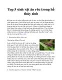 Top 5 sinh vật ăn rêu trong hồ thủy sinh